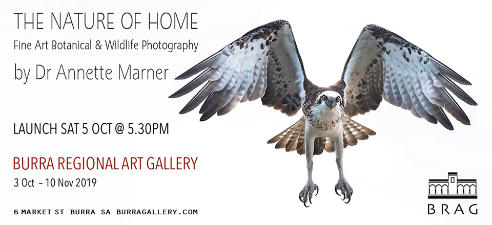 The Nature of Home: Fine Art Botanical & Wildlife Photography by Dr Annette Marner